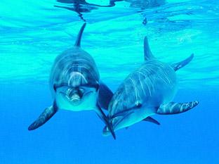dolphin_2007.jpg