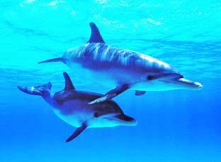 dolphin_2020.jpg